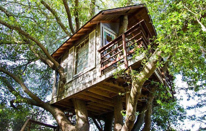 San Francisco Bay Treehouse - dom położony na wysokości 9 metrów.