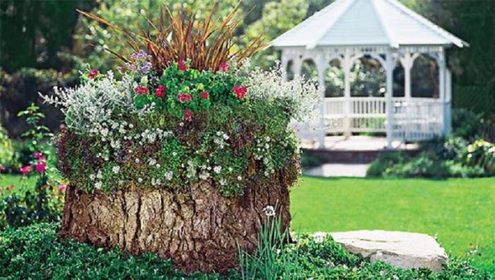 Градина - саксии за цветя - най-добрите идеи-443