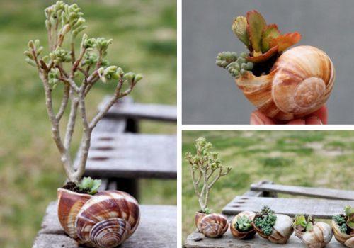Градина - саксии за цветя - най-добрите идеи-999-8