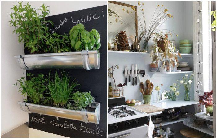Растенията оживяват интериора на малка кухня.