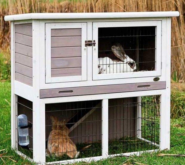 Направи си клетки за зайци: рисунки, размери и снимки