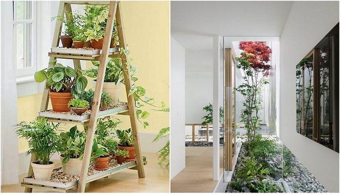 Оригинальные крытые сады дома, которые вдохновят.