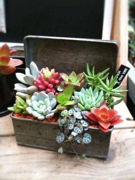 Один из лучших вариантов оформления мини-сада дома, что станет изюминкой.