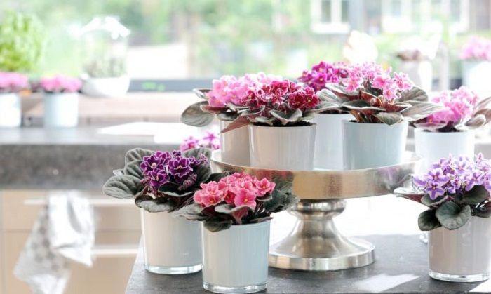 Възможно е да поставите хубава мини-градина на рафтовете, може би най-доброто решение за интериорна декорация.