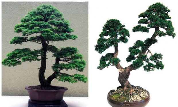 Bonsai gaffel