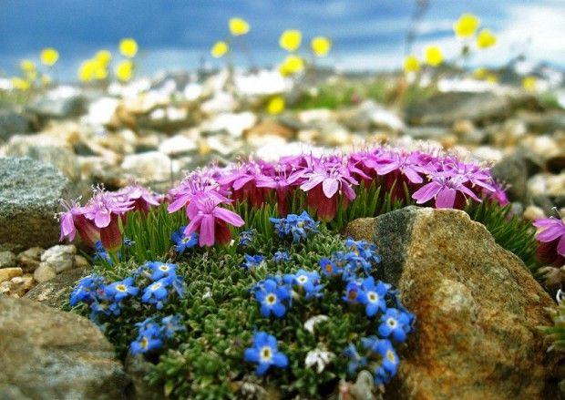 planter for steinhage