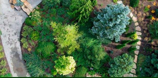 Havupuut puutarhaan