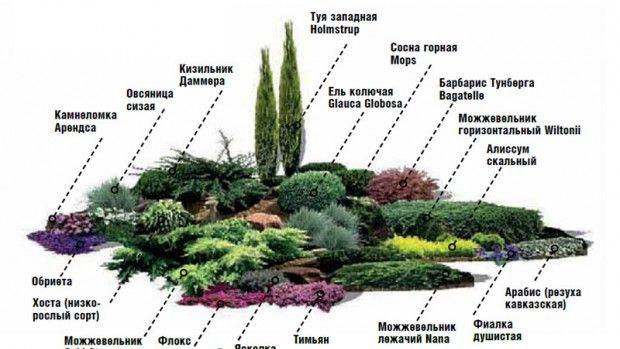 arrangement av busker og blomster