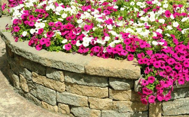 Цветната леха-monoflower
