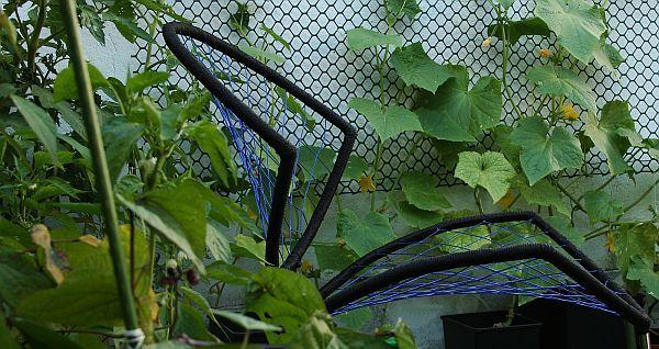 Очаровательный стул в оранжерее