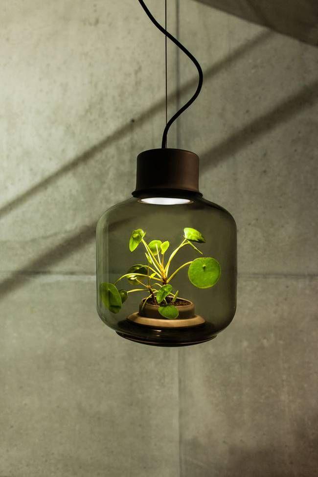 Напольный стеклянный светильник с растением внутри