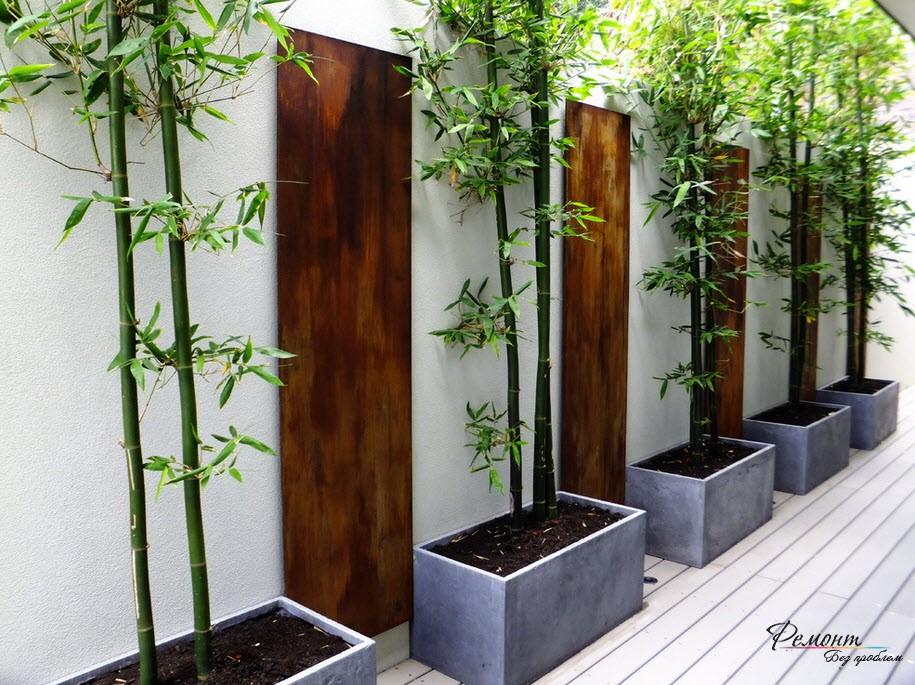 Biela stena a bambus